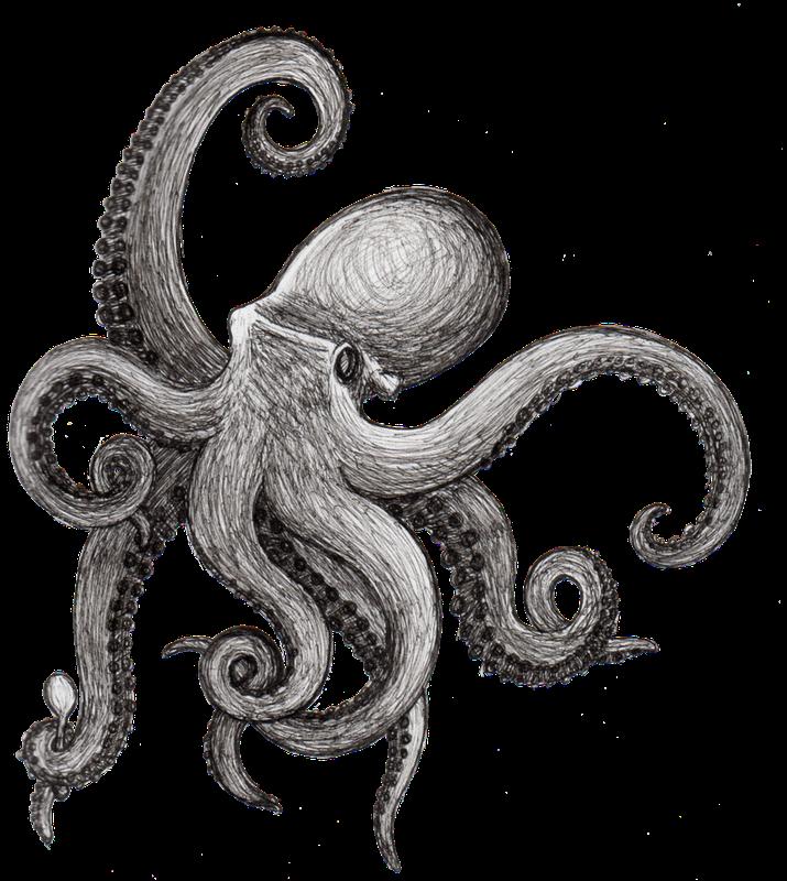 Griffe tattoo polvo e. Squid clipart mollusk