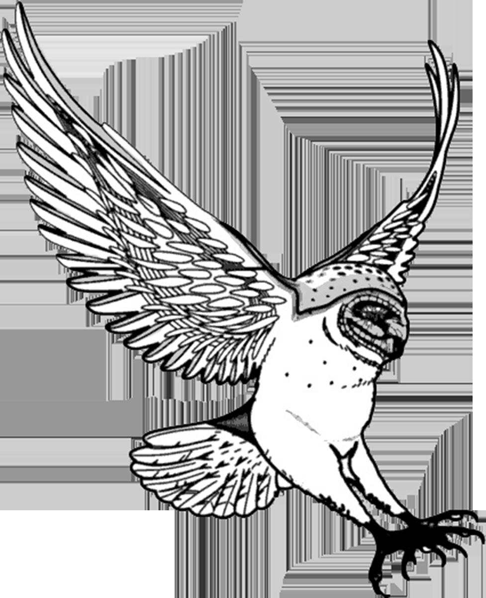 Fish clipart bird. Barred owl flight drawing