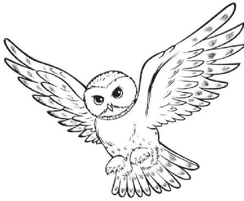 Clipart owl harry potter. Oil pastel art lesson