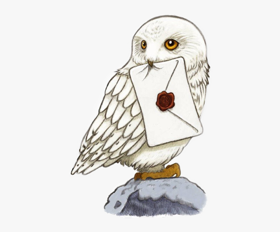 Owl drawing free cliparts. Owls clipart harry potter