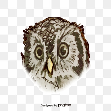 Png images download resources. Clipart owl high resolution