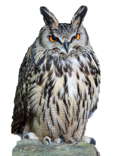 Clipart owl high resolution. Png transparent images all