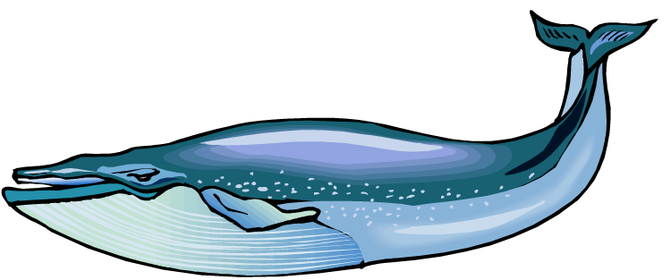 Blue pictures panda free. Clipart whale real whale