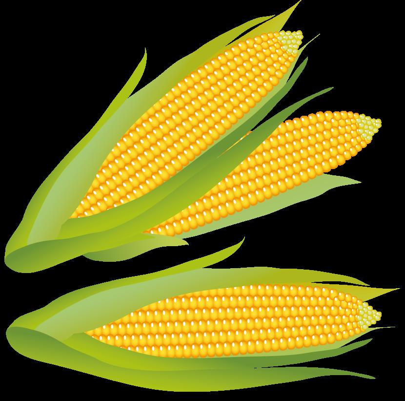 Corn clip art free. Clipart summer vegetable