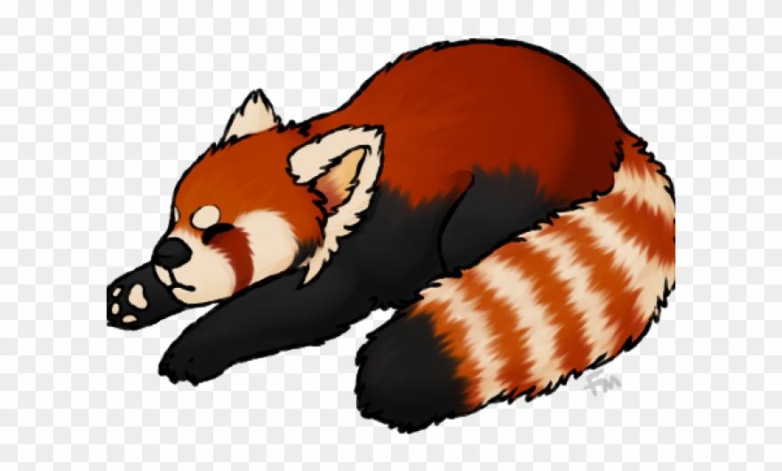 Clipart panda red panda. Transparent background no