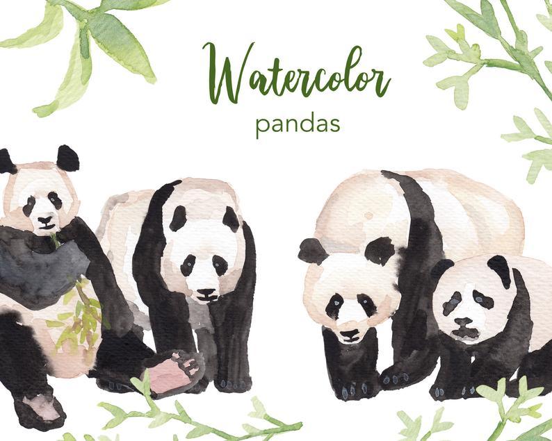 Watercolour set commercial use. Clipart panda watercolor