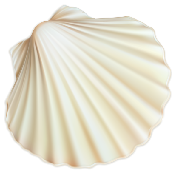 White sea png image. Shell clipart form