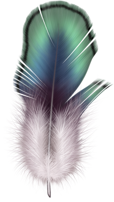 Tubes plumes feathers pinterest. Feather clipart hipster