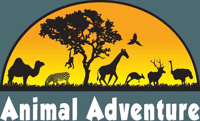 Adventure park pet feed. Koala clipart animal safari