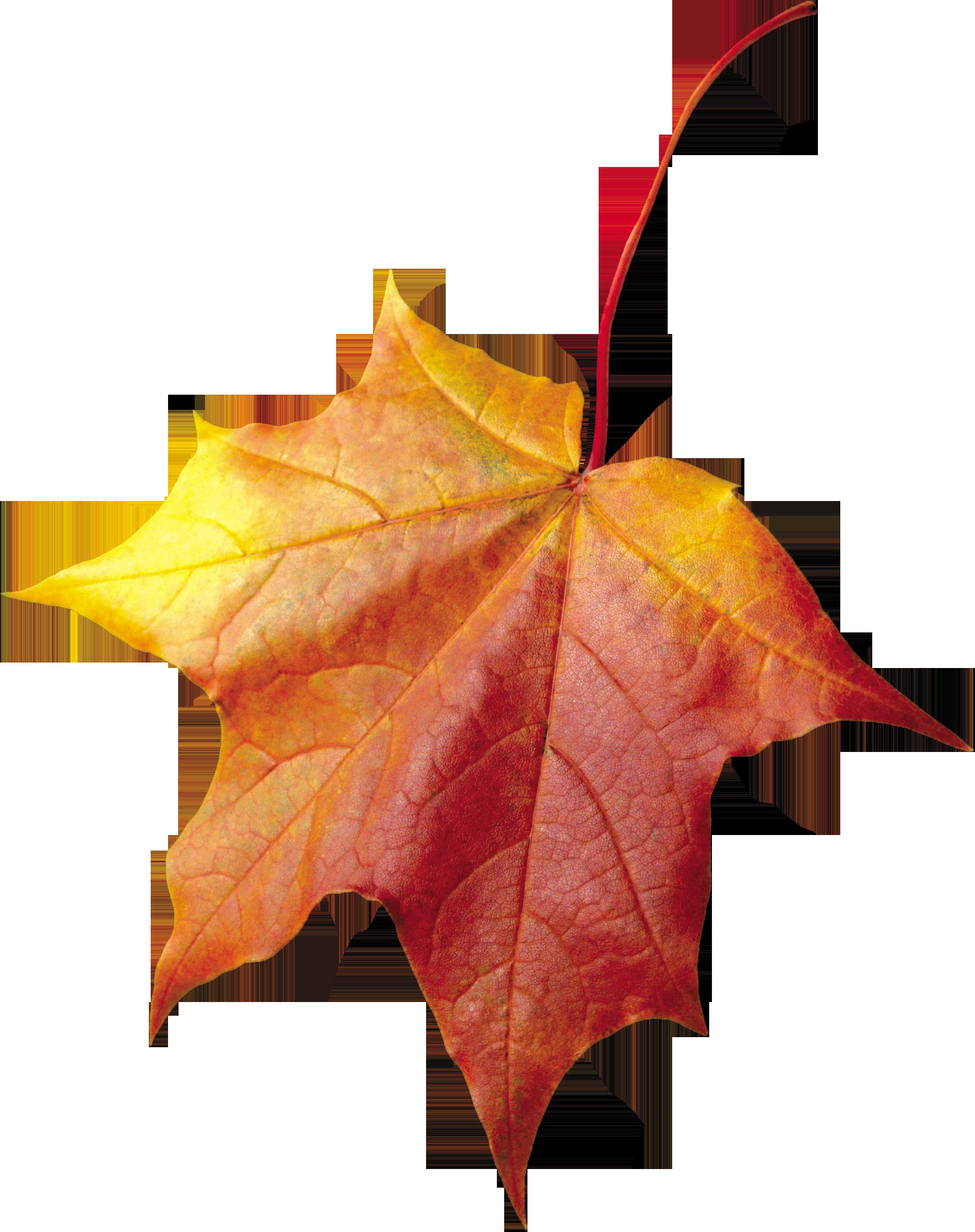 Clipart park autumn sky. Leaf three isolated stock