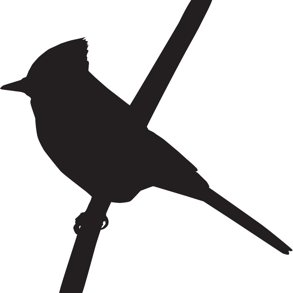 Clipart park birds. Steller s jay overview