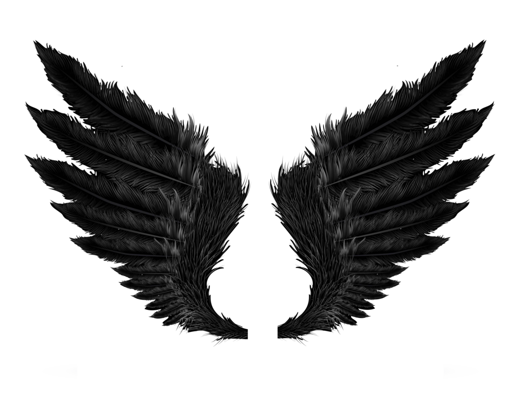 wing clipart wing hd