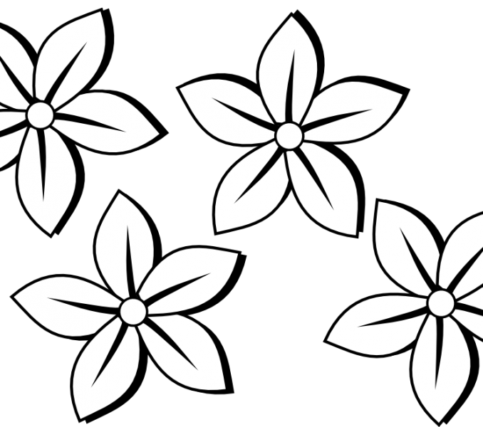 Outlines of flowers for. Poppy clipart colour outline