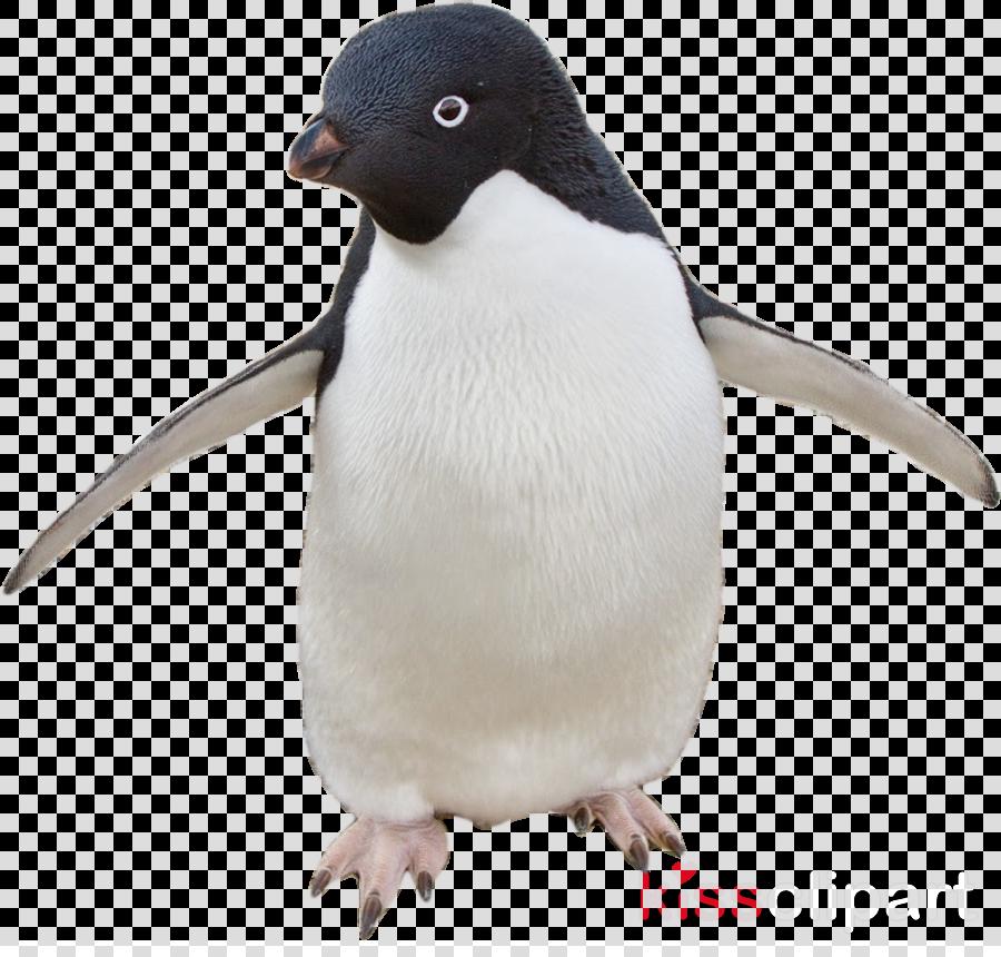 Cartoon bird transparent clip. Clipart penguin adelie penguin