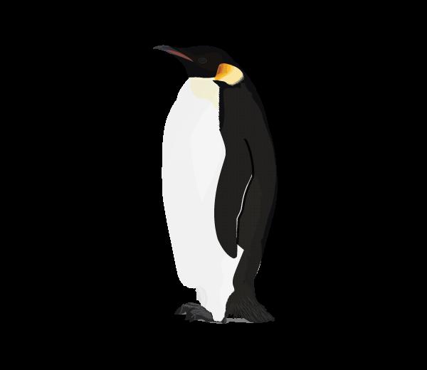 Week weekly bird one. Clipart penguin emperor penguin