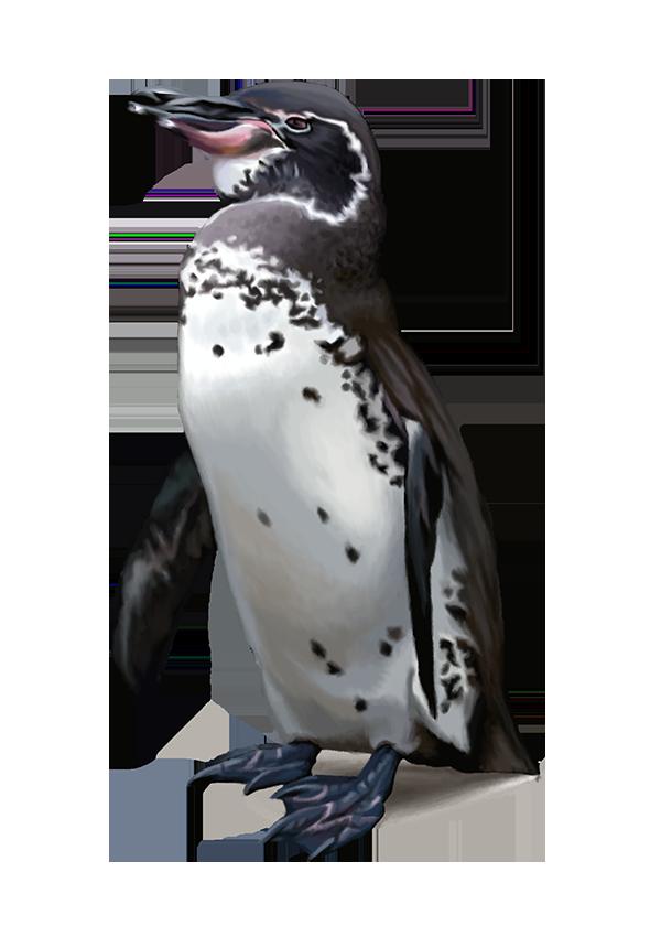 Download penguins png transparent. Clipart penquin galapagos penguin