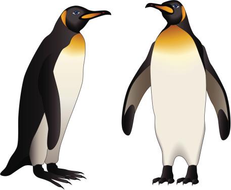 Clipart penguin gentoo penguin. Free cliparts download clip