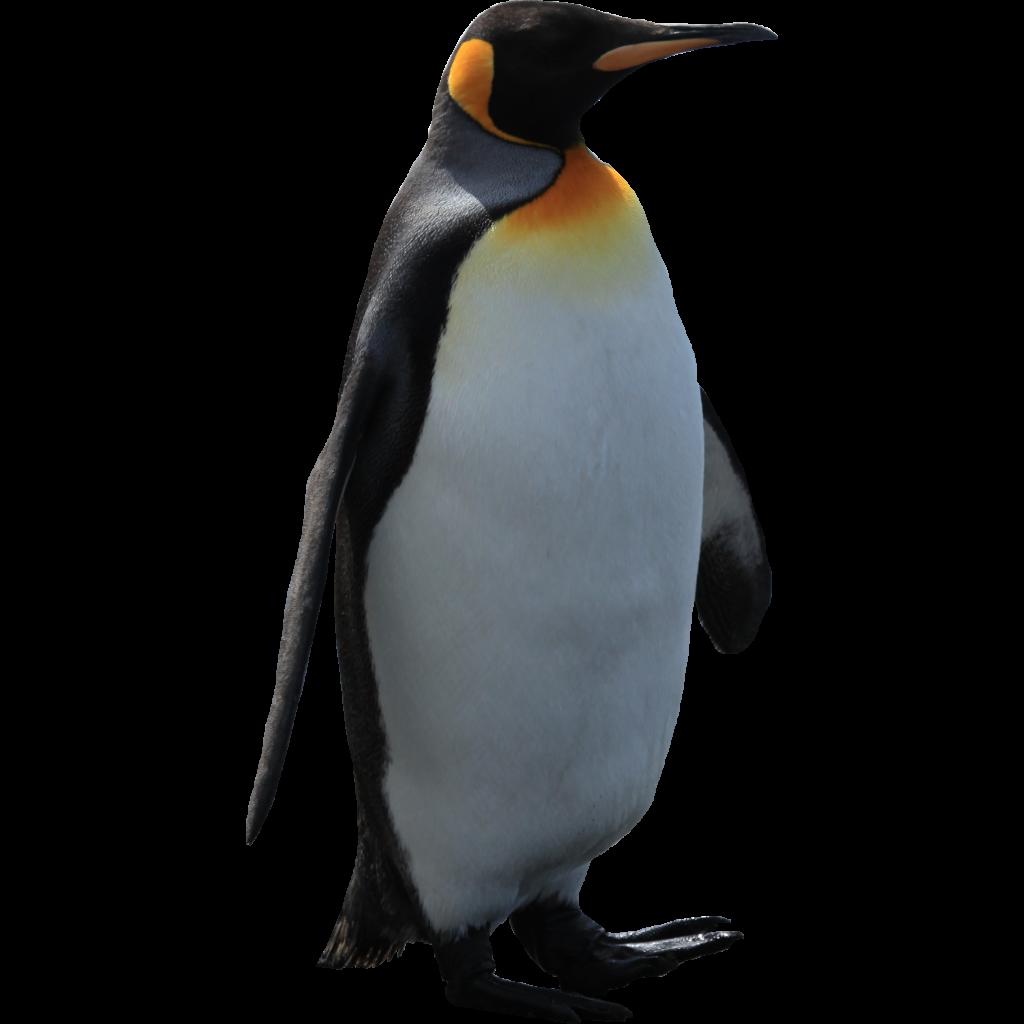 Clipart penguin king penguin. Emperor clip art pinguins