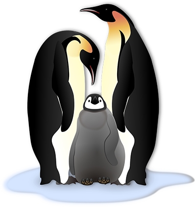 Clipart penquin galapagos penguin. Fun facts about penguins