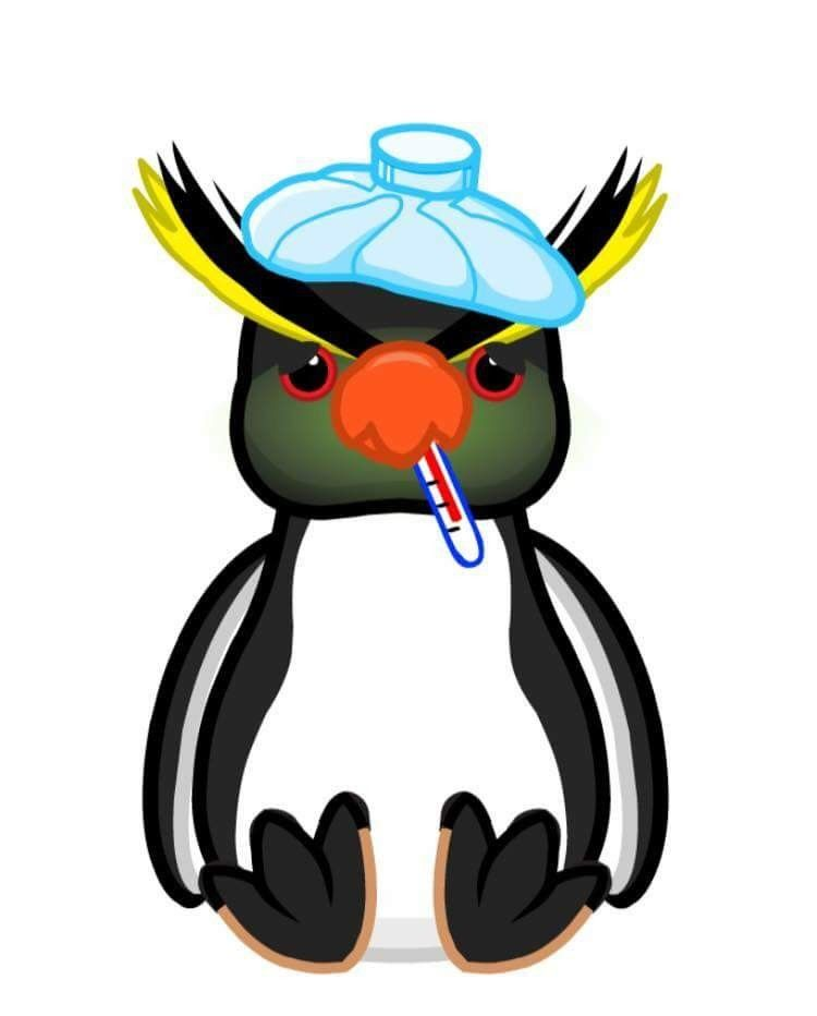 Clipart penquin galapagos penguin. I love penguins penquins