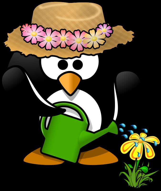 clipart penquin little penguin