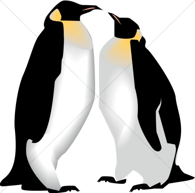 Penguins wildlife . Clipart penquin two