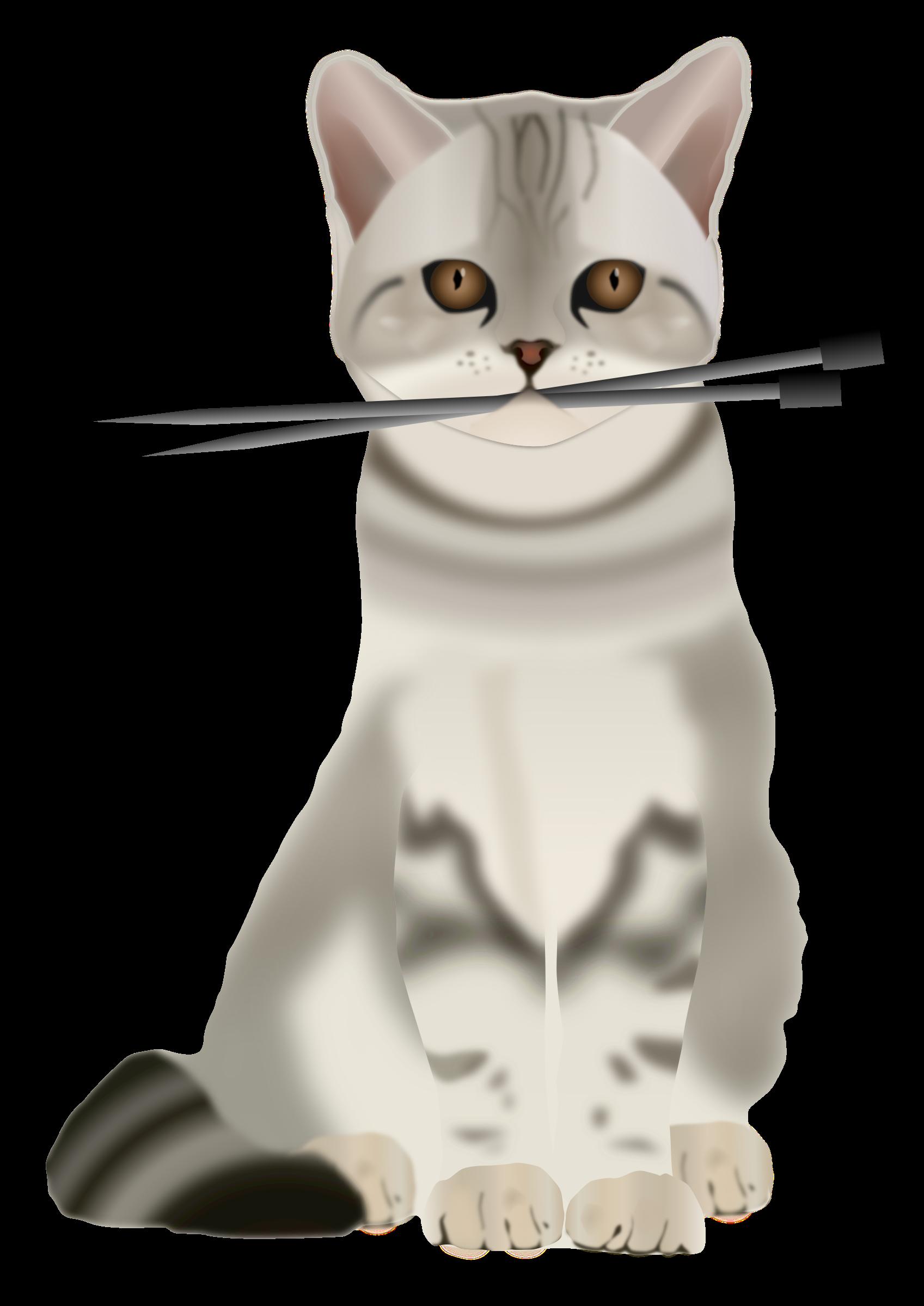 Cat with needles big. Needle clipart knitting needle