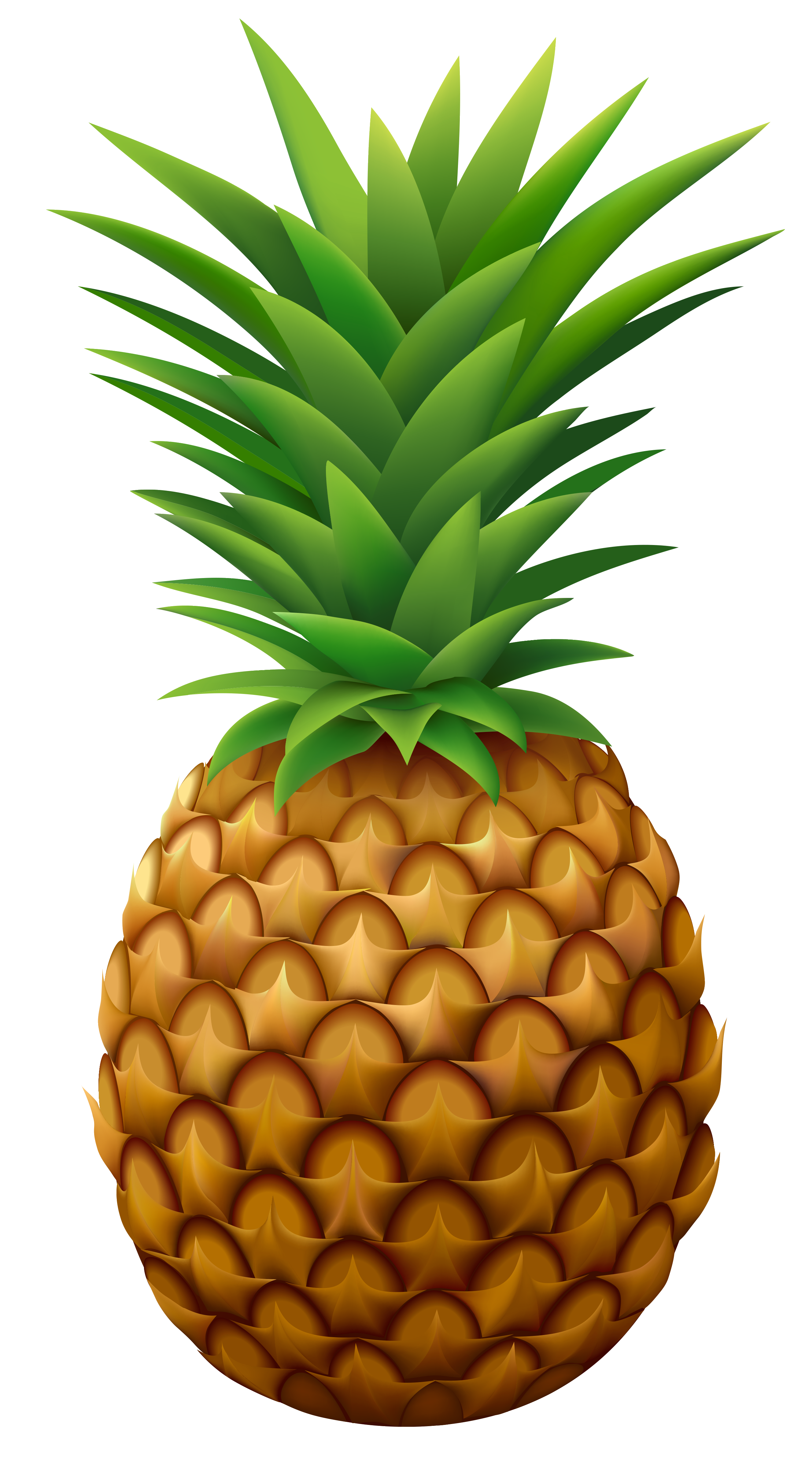 Clipart person pineapple. Beach graphics illustrations free