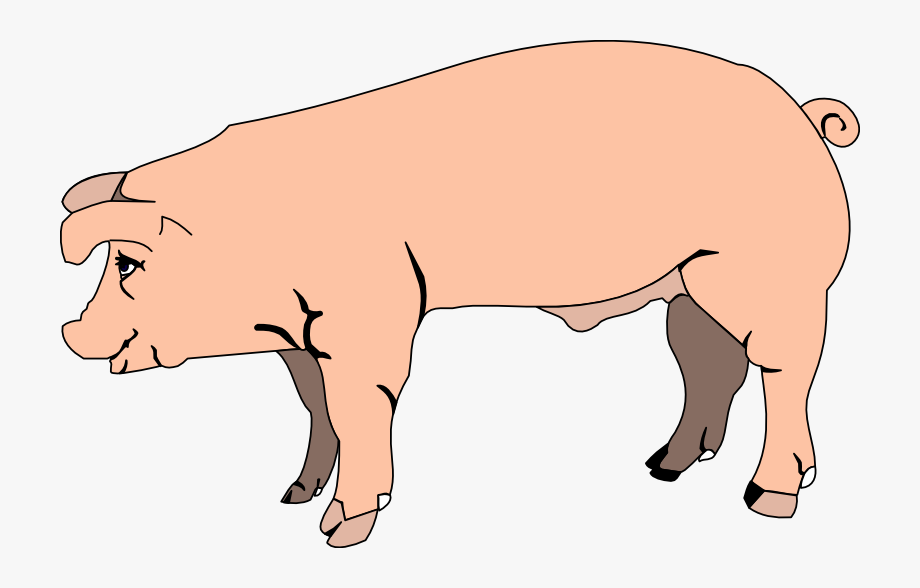 Image with transparent . Clipart pig clear background