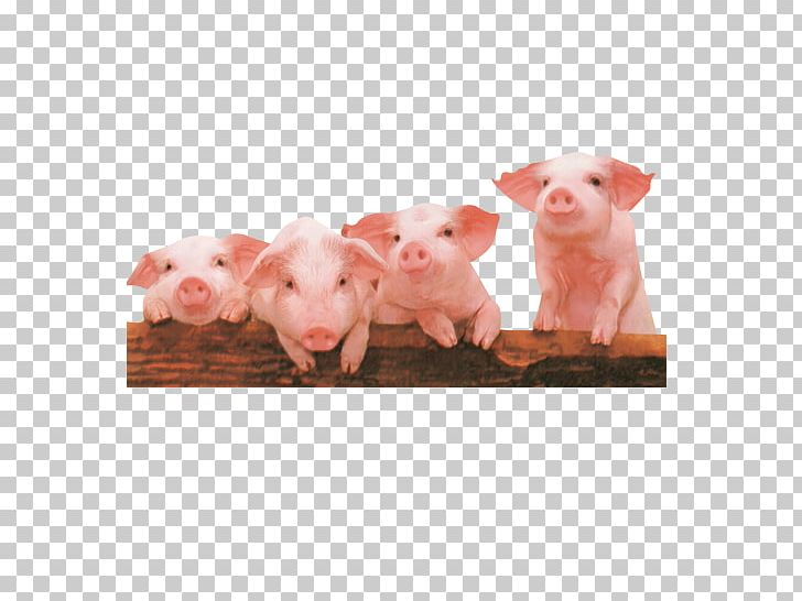 Domestic computer file png. Clipart pig four