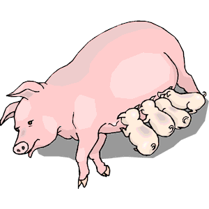 Feeding piglets cliparts of. Clipart pig meal