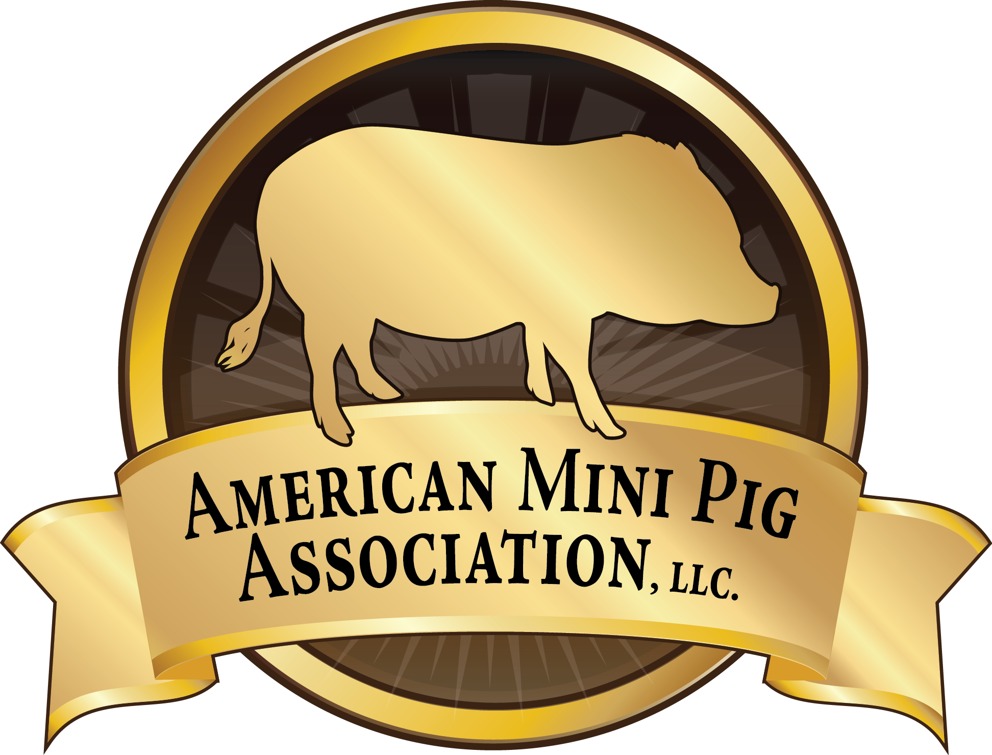 Clipart pig mini pig. American association st year