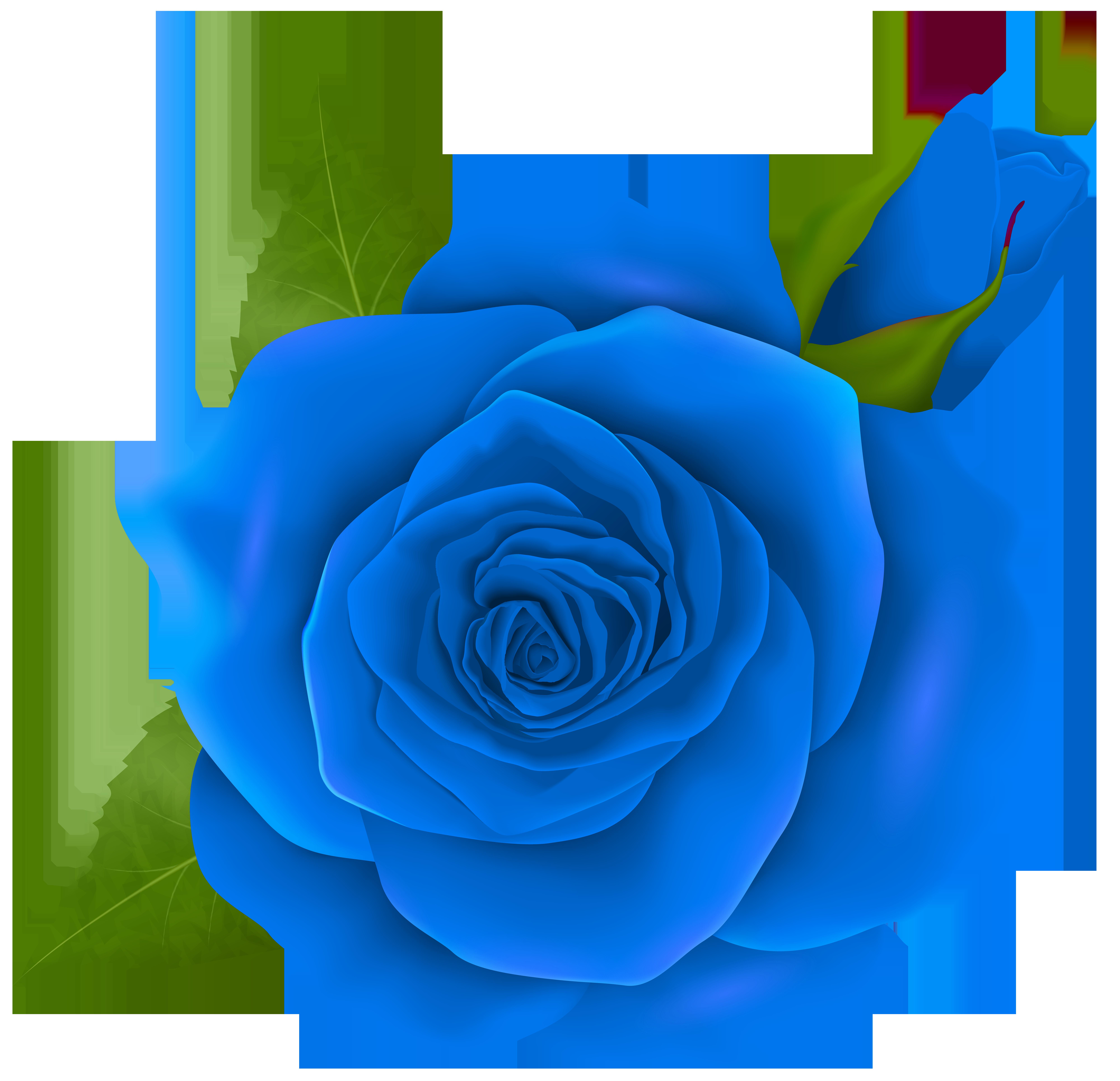 Pear clipart rose. Pink clip art blue