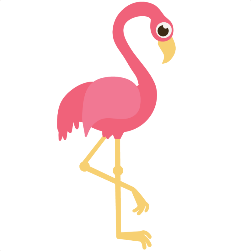 Flamingos or Flamingoes are a type of wading bird in the genus