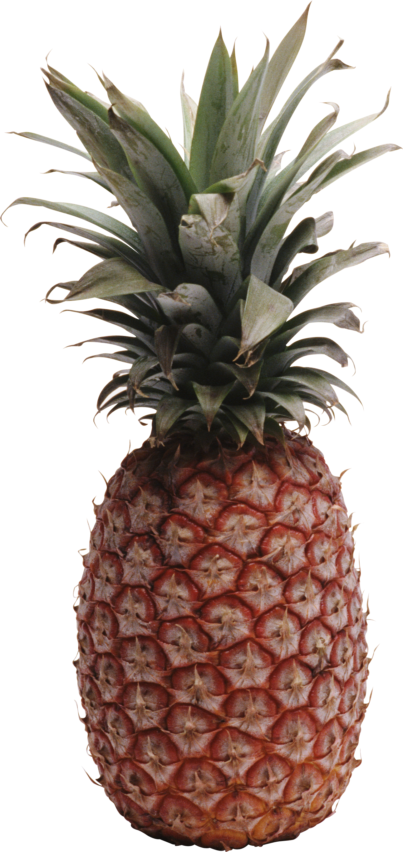 Png images free pictures. Clipart pineapple flower