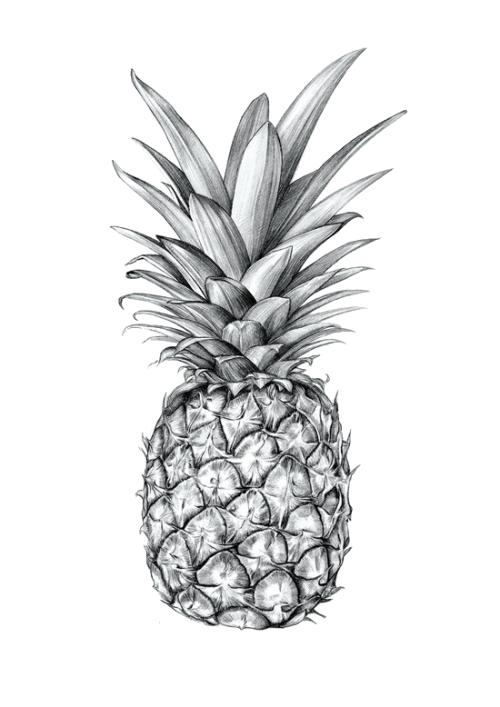 Transparent tumblr verysexyrhino. Clipart pineapple funky