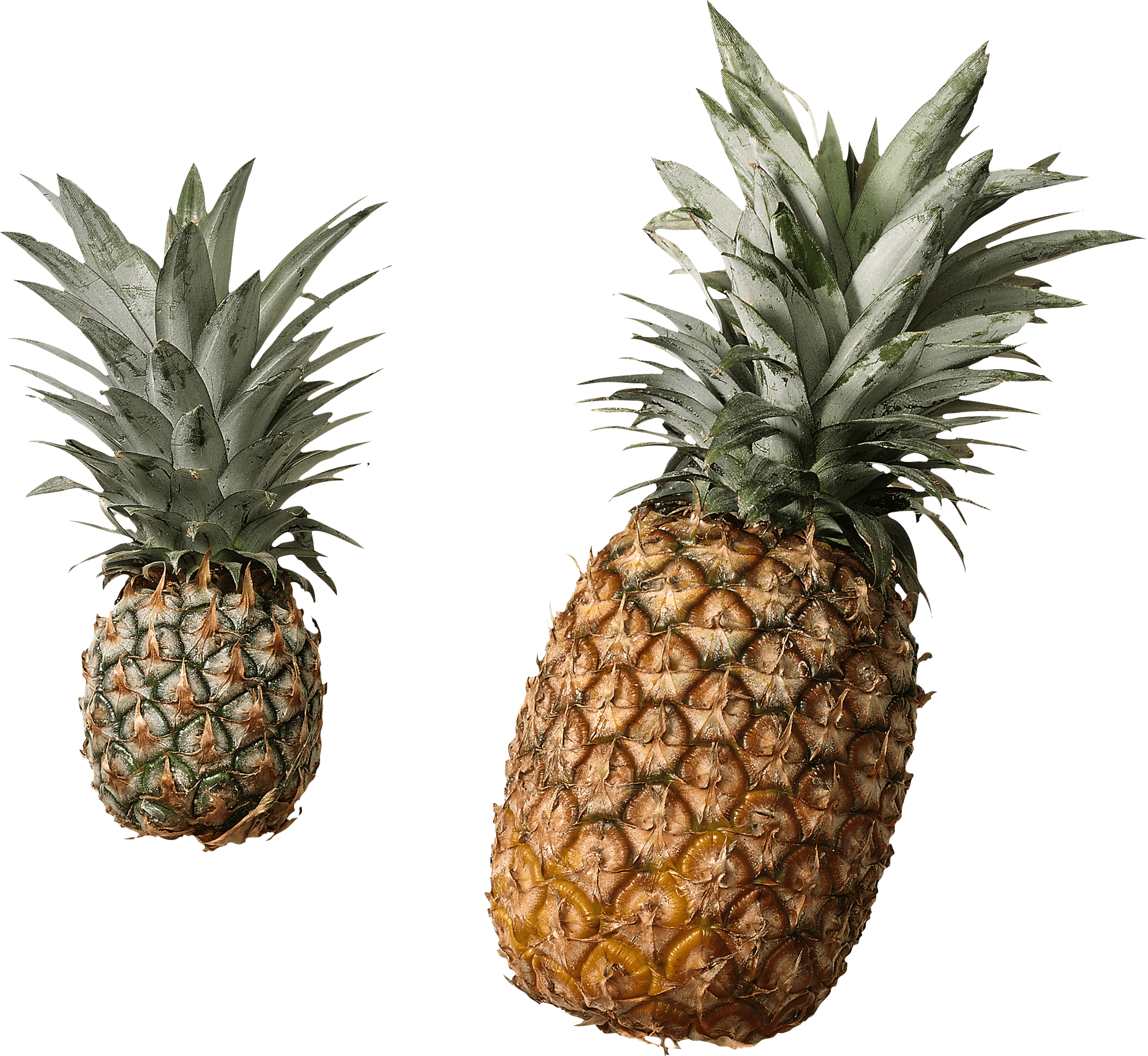 Clipart pineapple high quality. Duo transparent png stickpng