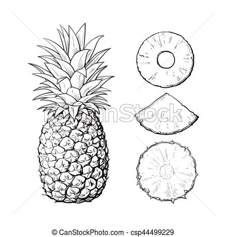 Clipart pineapple sketch. At paintingvalley com explore