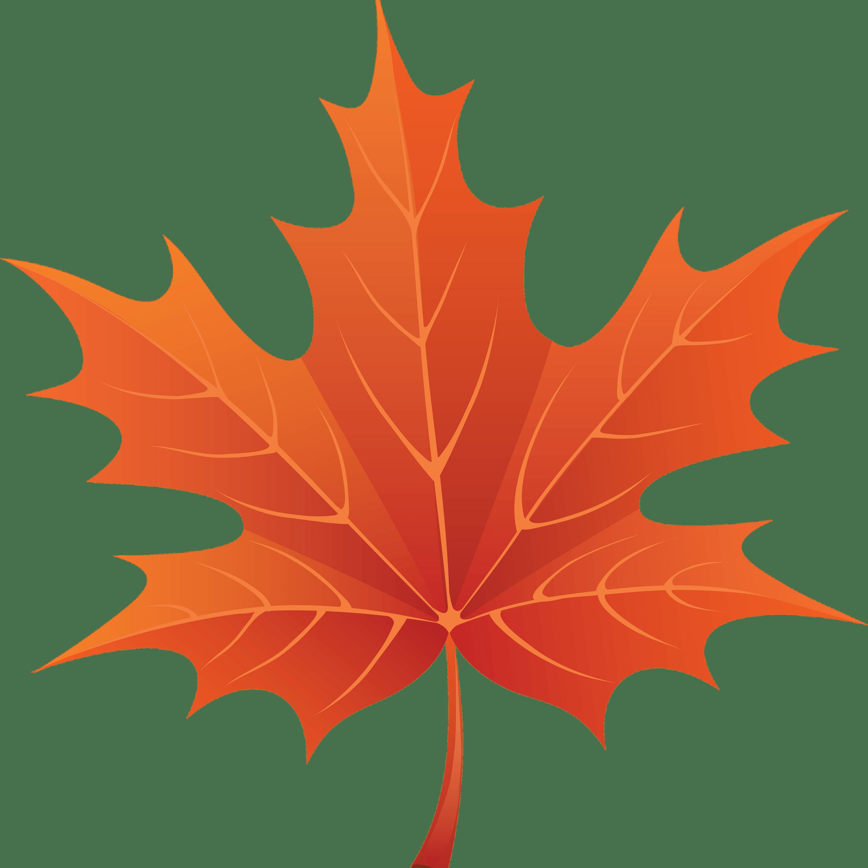 Leaf clipart transparent background. Brown maple png stickpng
