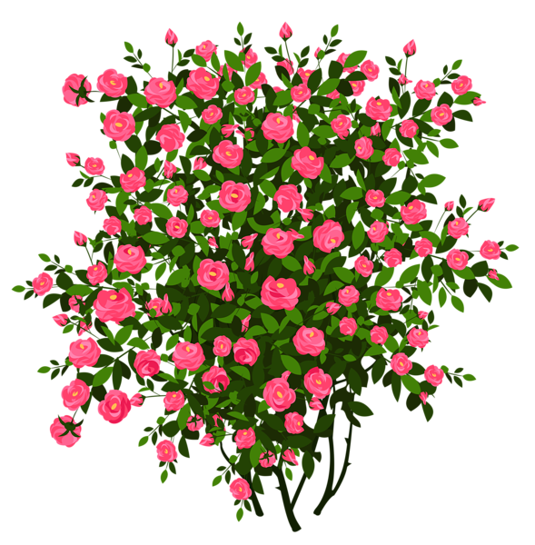 Pink rose picture pinterest. Clipart png bush