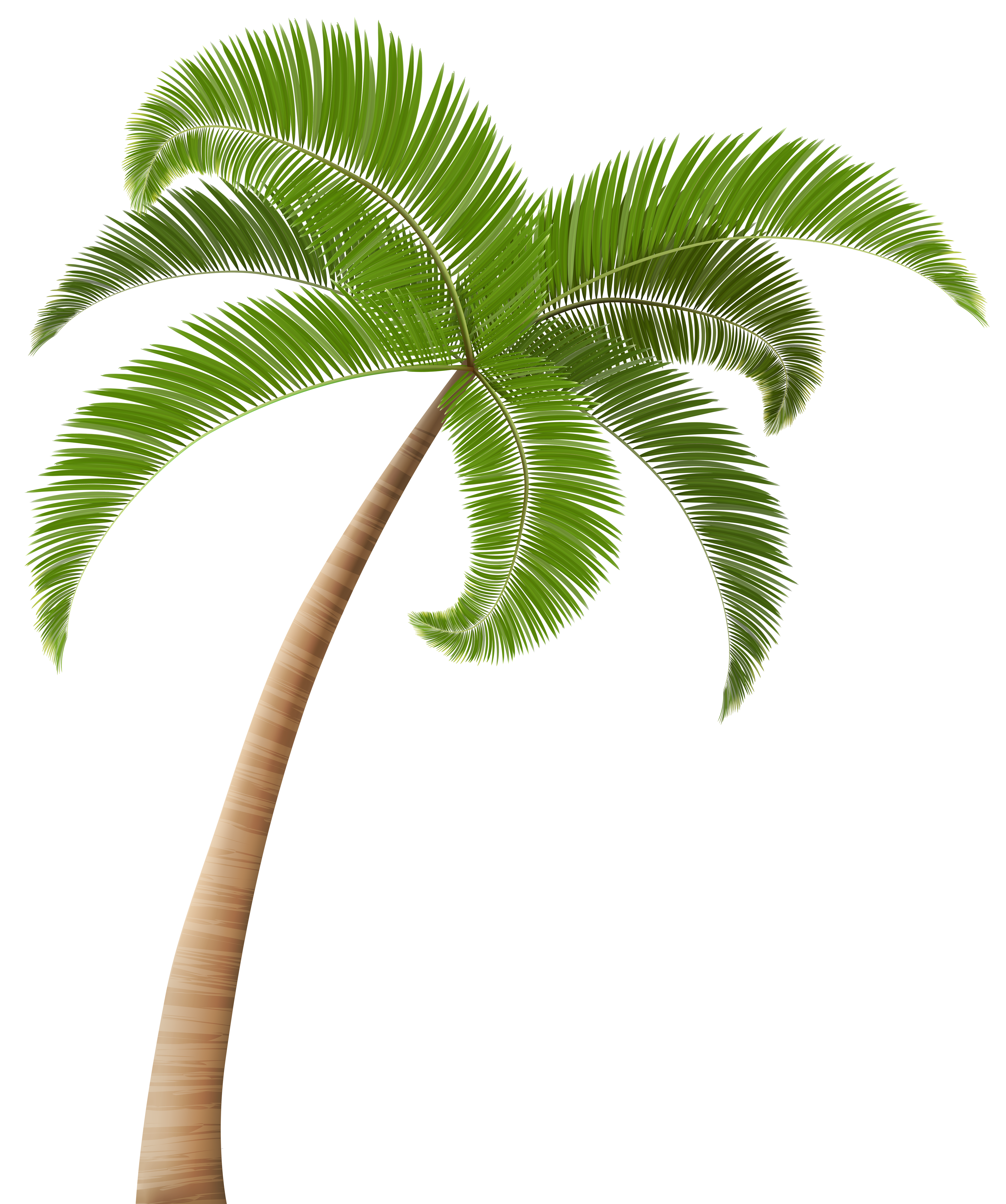 Palm png clip art. Tree clipart coconut