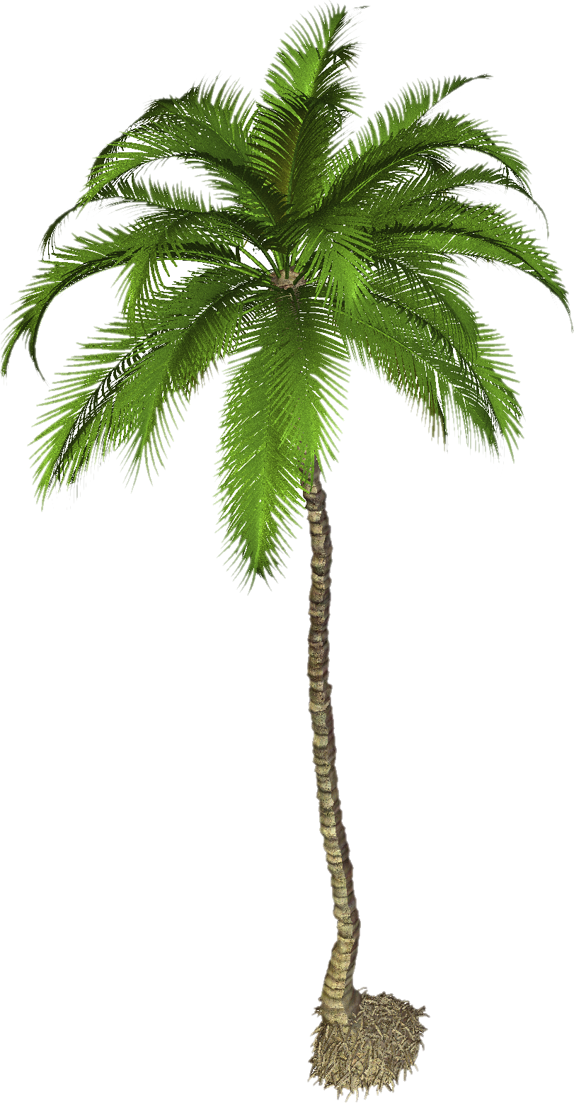 Png photo mart pinterest. Tall clipart coconut tree