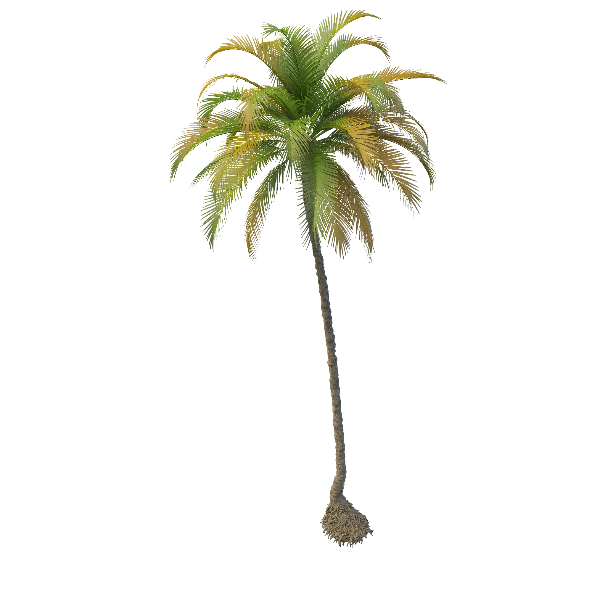 Png file mart. Hawaiian clipart coconut tree