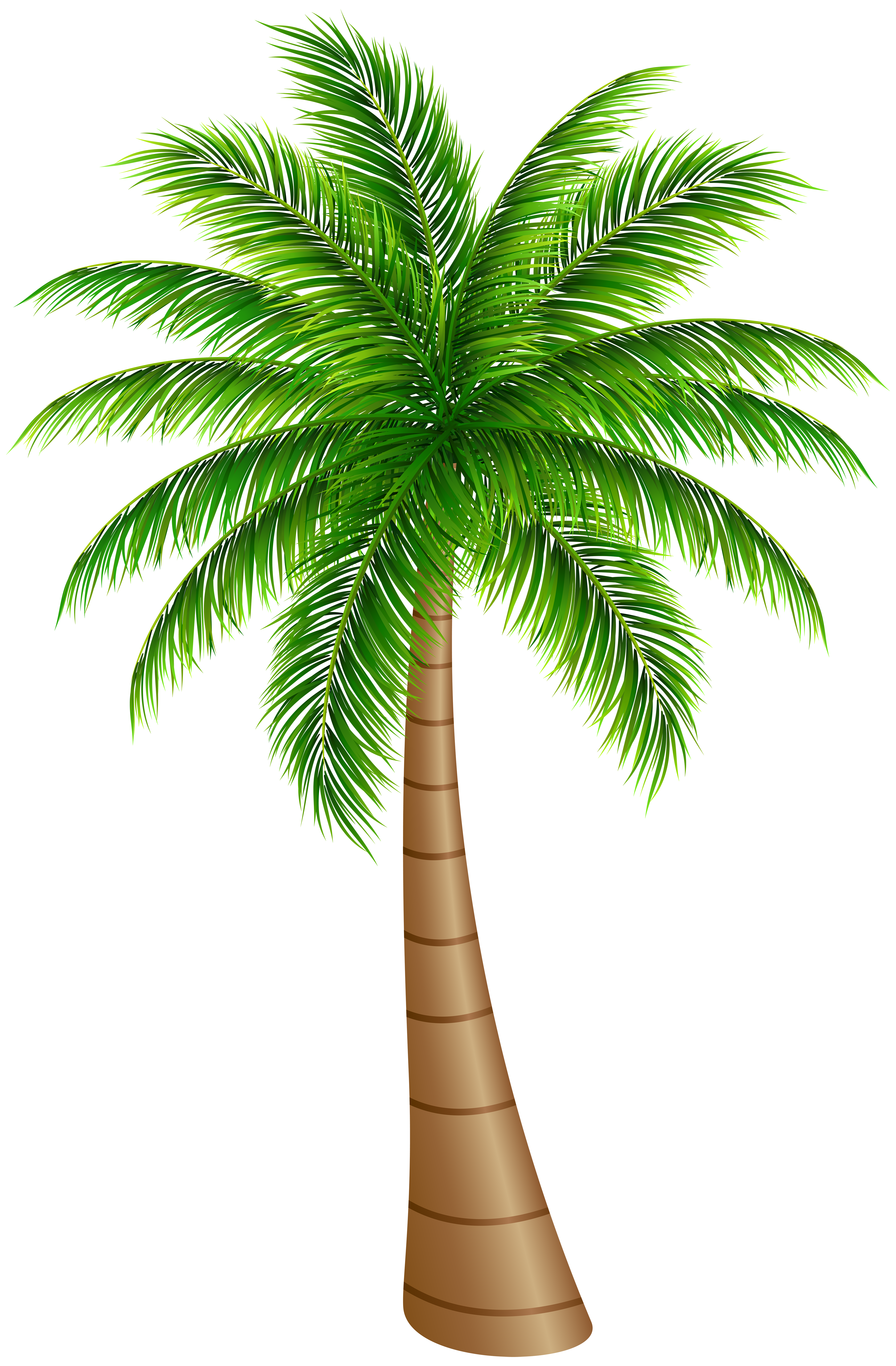 Palm tree png clip. Coconut clipart large