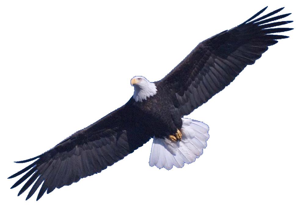 Clipart png eagle. Bald transparent images all