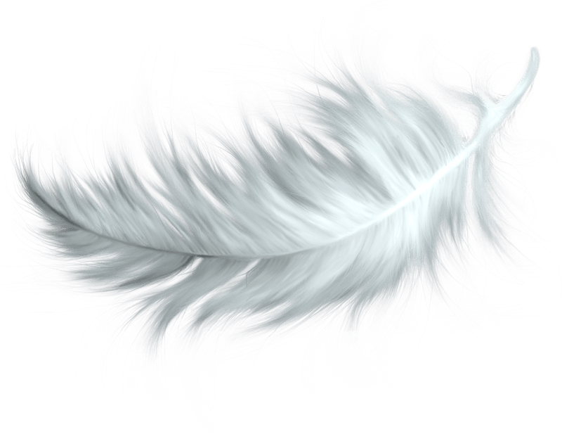 Feather clipart victorian. Brown transparent png stickpng