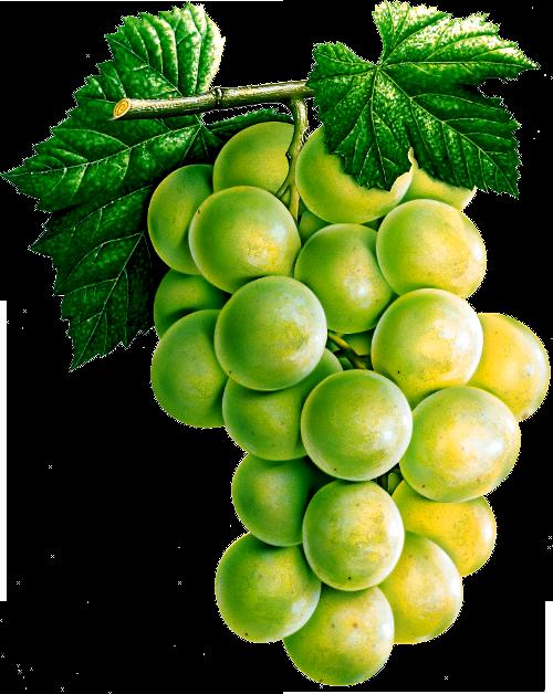 I clipart grape. Png eleven image transparent