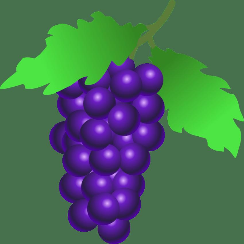 Clipart png grape. Grapes clip art free