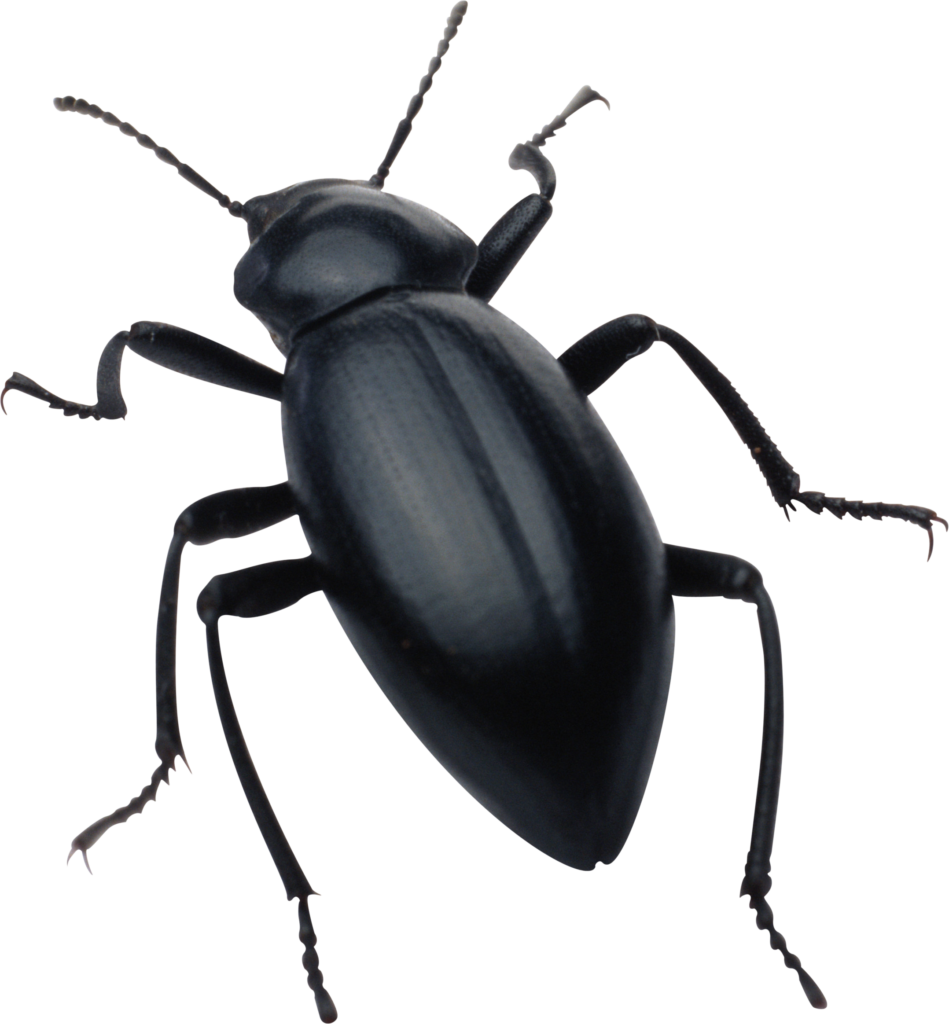 Png peoplepng com. Insect clipart invertebrate animal