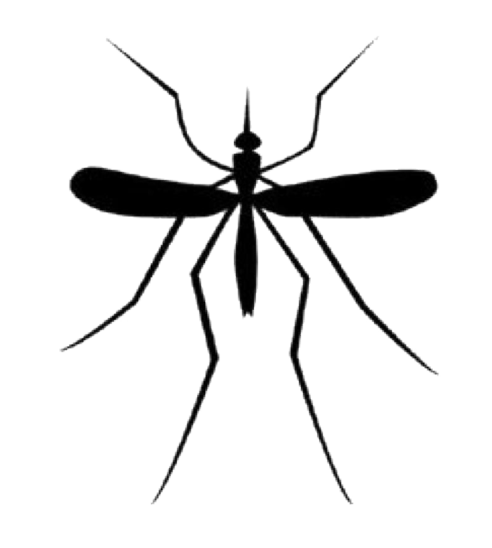 Mosquito png transparent images. Fly clipart little bug